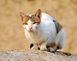 gato32