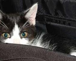 ¿Por qué mi gato no orina en su caja?