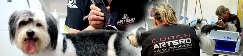 peluquería clinica veterinaria ansoain